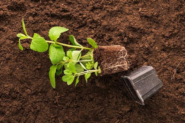 Flat lay de planta y herramientas de jardinería