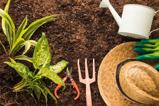 Flat lay de planta verde y equipamiento de jardín
