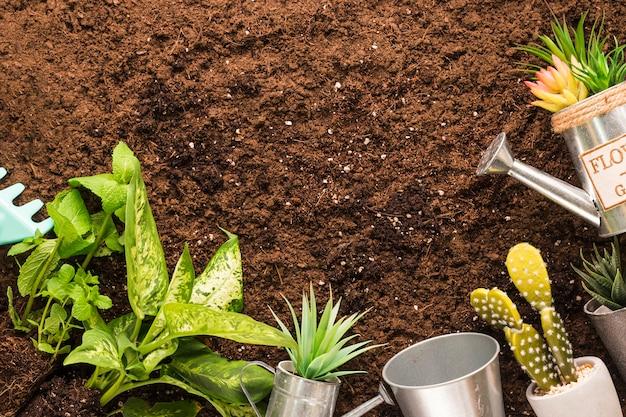 Flat lay de plantas y herramientas de jardín con copyspace