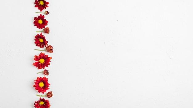 Flay lay de coloridas margaritas de primavera con espacio de copia
