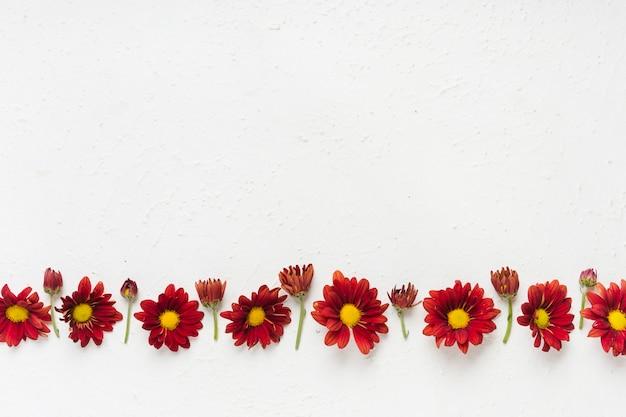 Flay lay de coloridas margaritas de primavera