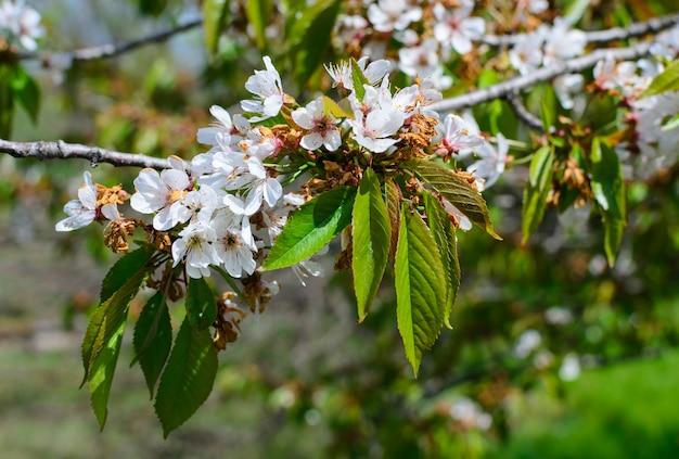 Flofwers de árboles de belleza con hojas
