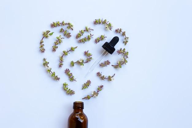 Flor de albahaca dulce con botella de gota de hierba de aceite esencial sobre fondo blanco