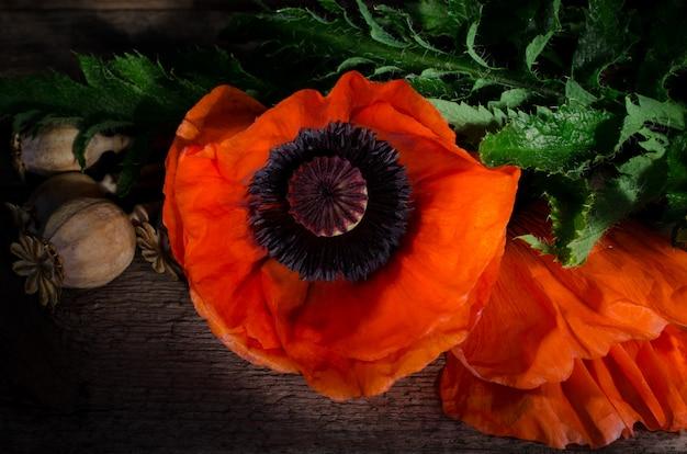 Flor de amapola roja sobre un fondo de madera oscuro