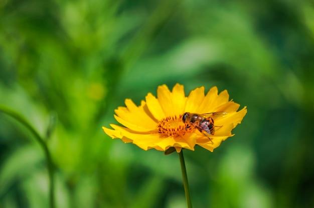 Flor amarilla con abeja al aire libre