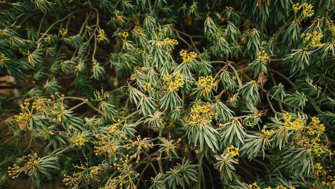 Flor amarilla que florece en la planta