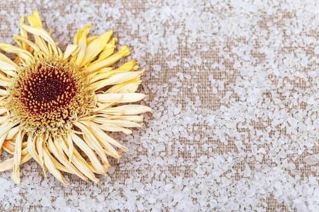 Flor amarilla seca de gerbera sobre fondo de lino con sal marina dispersa.
