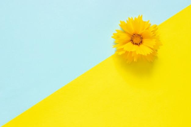 Una flor amarilla sobre fondo de papel azul y amarillo estilo minimalista