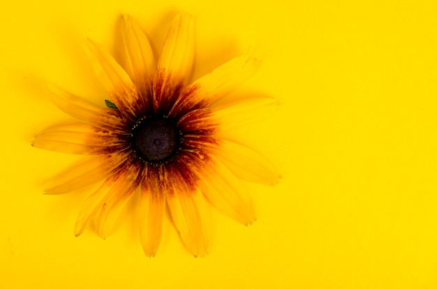 Flor amarilla sobre papel brillante