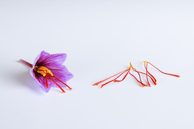 Flor de azafrán fresca e hilos de azafrán secos sobre un fondo blanco.