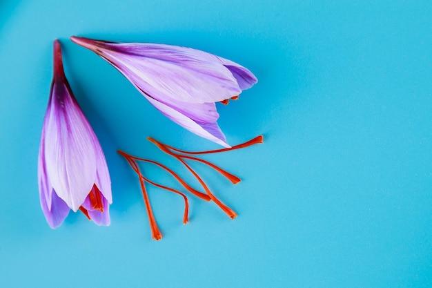 Flor de azafrán fresca e hilos de azafrán