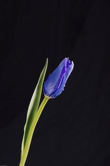 Flor azul aromática con hojas verdes en rocío.