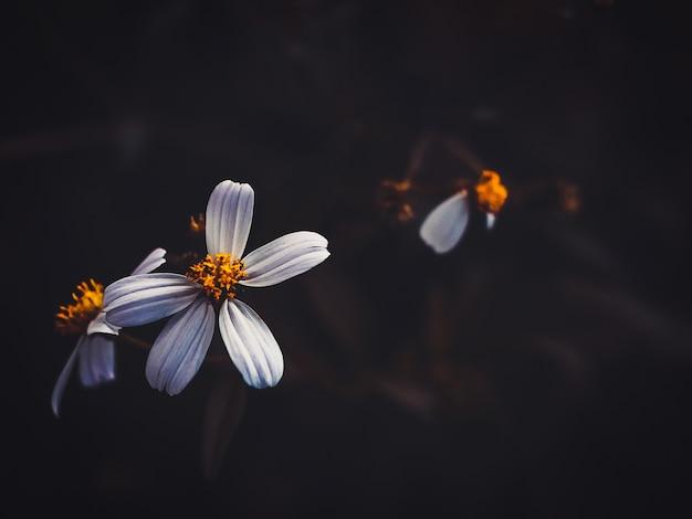 Flor blanca bakcground