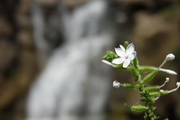 Flor blanca con una cascada de fondo desenfocada