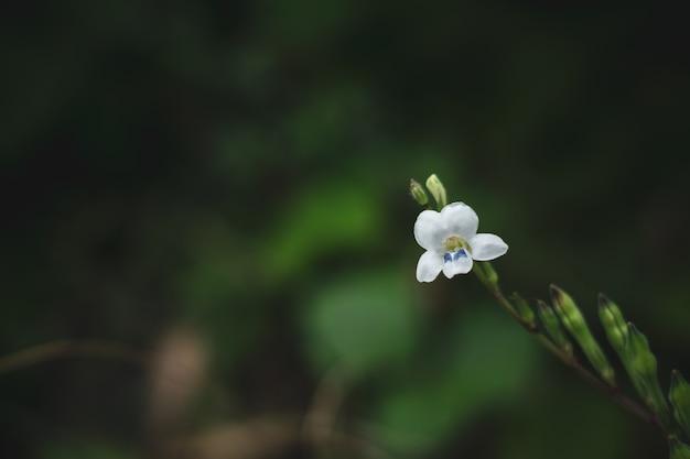 Flor blanca pequeña del bosque en la selva tropical