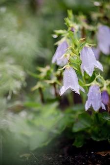 Flor blanca y violeta en lente de cambio de inclinación