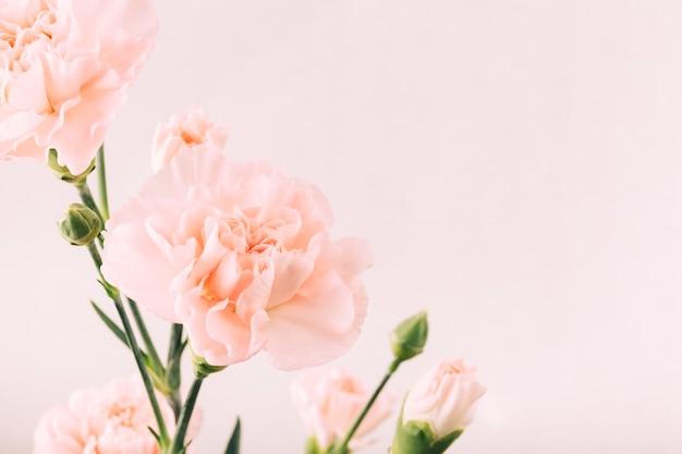 Flor y brote en fondo liso
