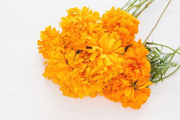 Flor de cempasuchil, flores mexicanas en el día de los muertos, méxico