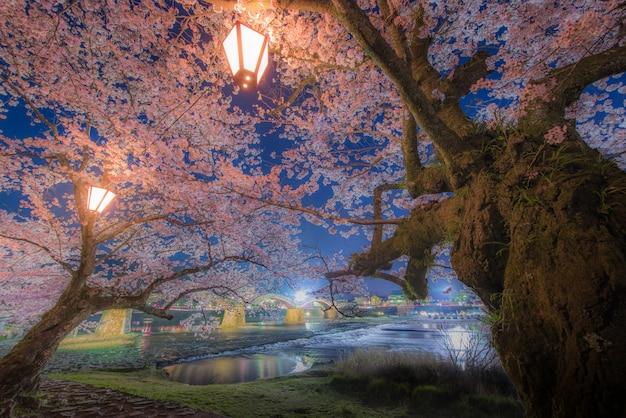 Flor de cerezo en el puente kintaikyo, japón