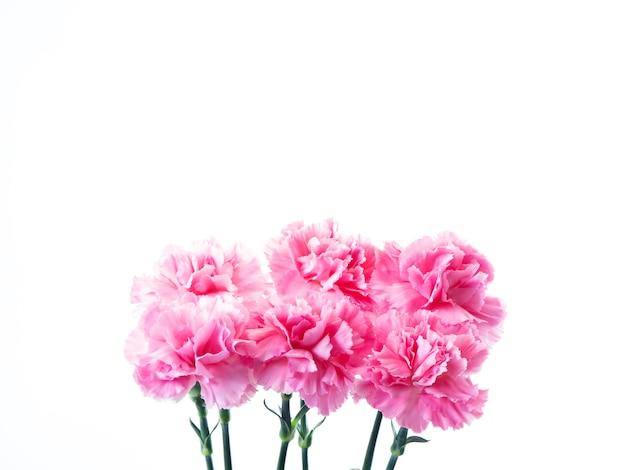 Flor de claveles rosa para dia de la madre.