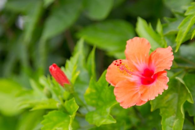 Flor de color con fondo de naturaleza verde