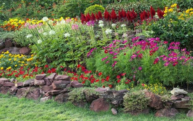 Flor colorida en el jardín