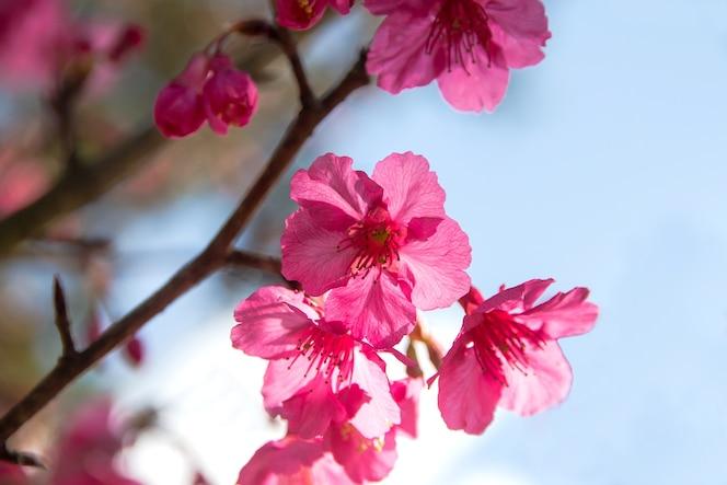 De Flores En La Montana: Descargar Vectores Gratis
