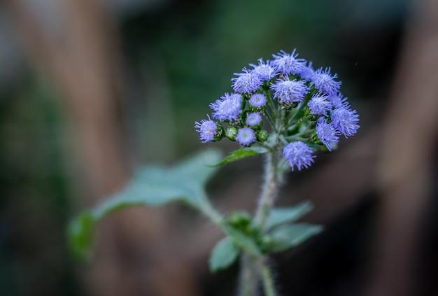 Una flor desconocida