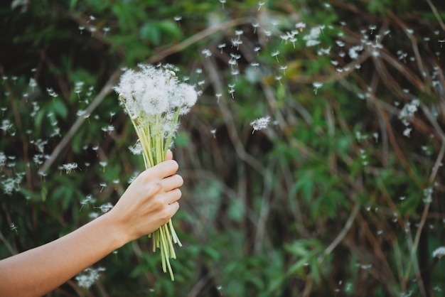 Flor de diente de león en mano de niña.