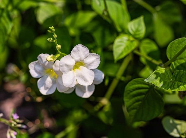 Flor de flor blanca con luz del día