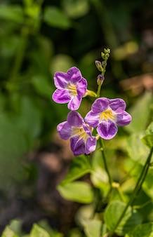 Flor de flor violeta con luz del día