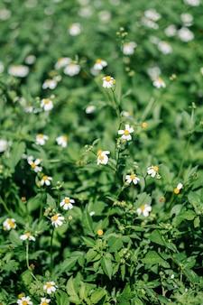Flor floreciendo