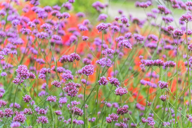 De Flores En La Montana: Flores De Montaña, De Flores
