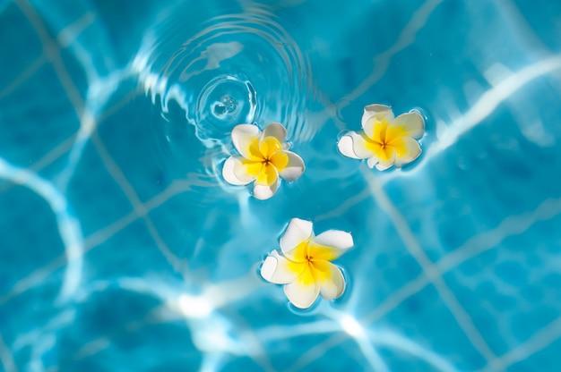 Flor de frangipani en el agua azul