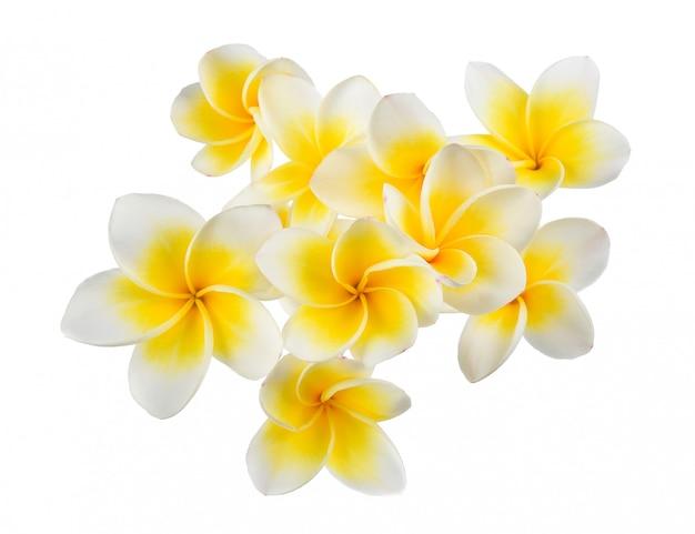 Flor frangipani aislado sobre fondo blanco.