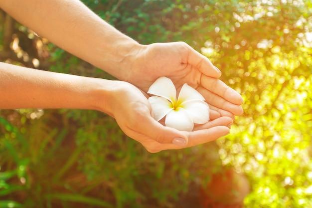 Flor de frangipani en mano de mujer.