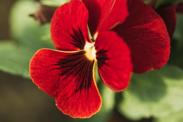 Flor fresca roja increíble