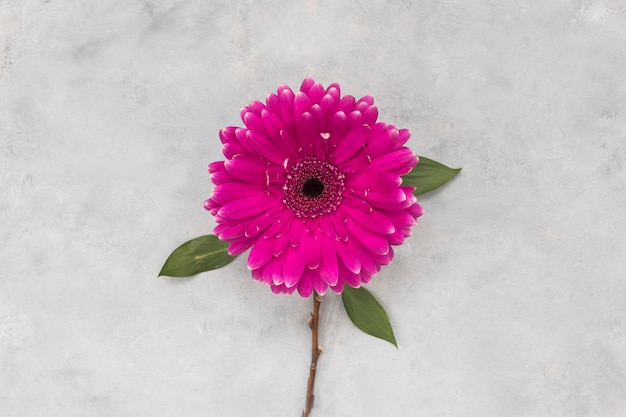 Flor de gerbera en mesa gris