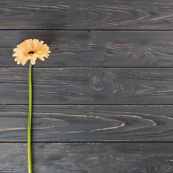 Flor de gerbera naranja en mesa de madera