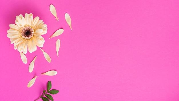 Flor de gerbera con pétalos y rama de planta.