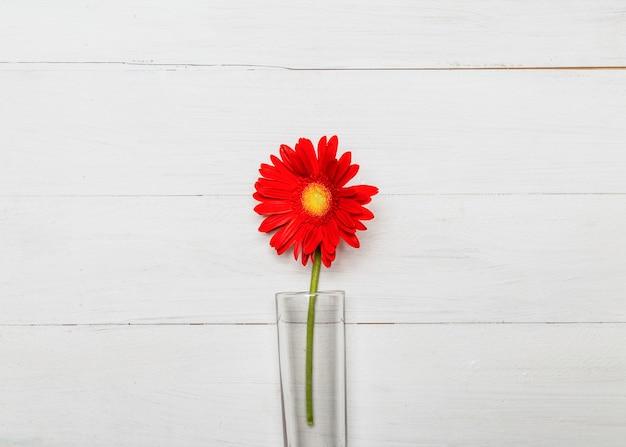 Flor de gerbera roja en florero de vidrio.