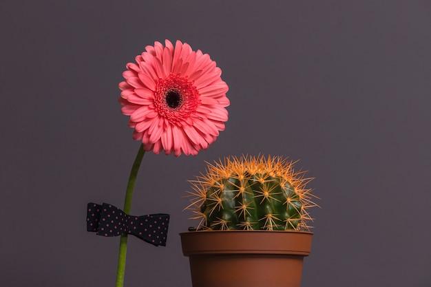 Flor de gerbera rosa con una pajarita en el tallo junto a un cactus en una maceta marrón. el concepto de relación, amistad, amor en pareja.