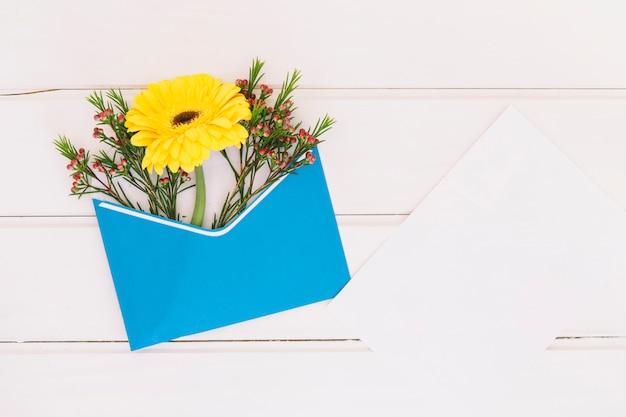 Flor de gerbera en sobre con papel.
