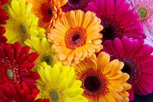 Flor de gerberas