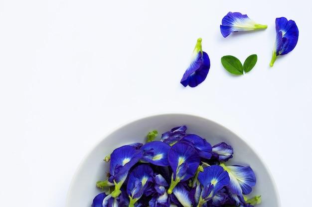 Flor del guisante de mariposa en blanco.