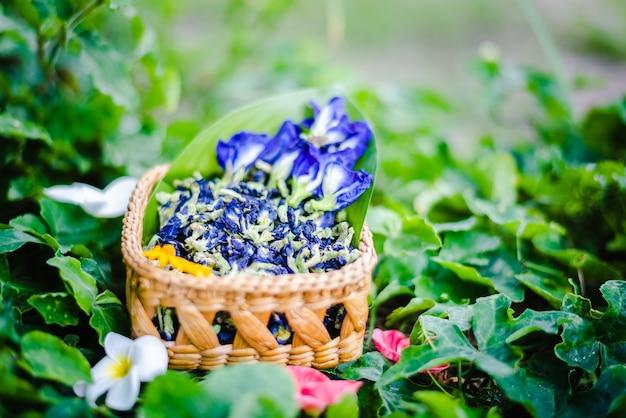 Flor de guisante mariposa fresca o guisante azul, bluebellvine, guisante cordofan, clitoria ternatea con hoja verde en canasta de bambú