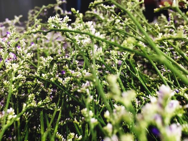 Flor hermosa atractiva naturaleza pacífica concepto