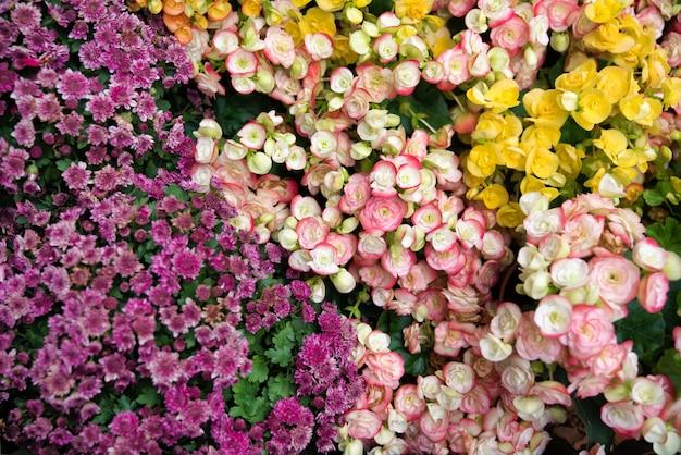 Flor hermosa flores coloridas florecientes en jardín como fondo floral