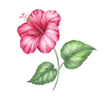 La flor de hibisco.