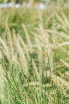 Flor de hierba borrosa